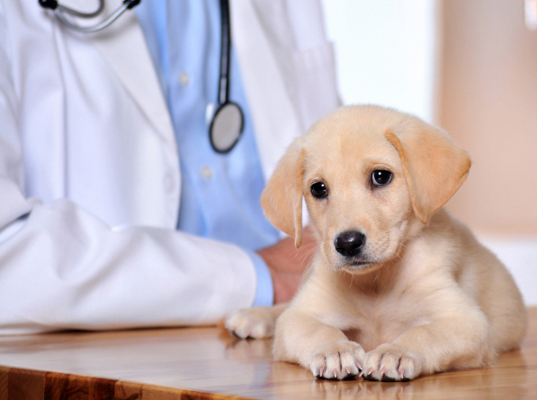 Port Jefferson, Long Island, NY. Pet Clinic Insurance